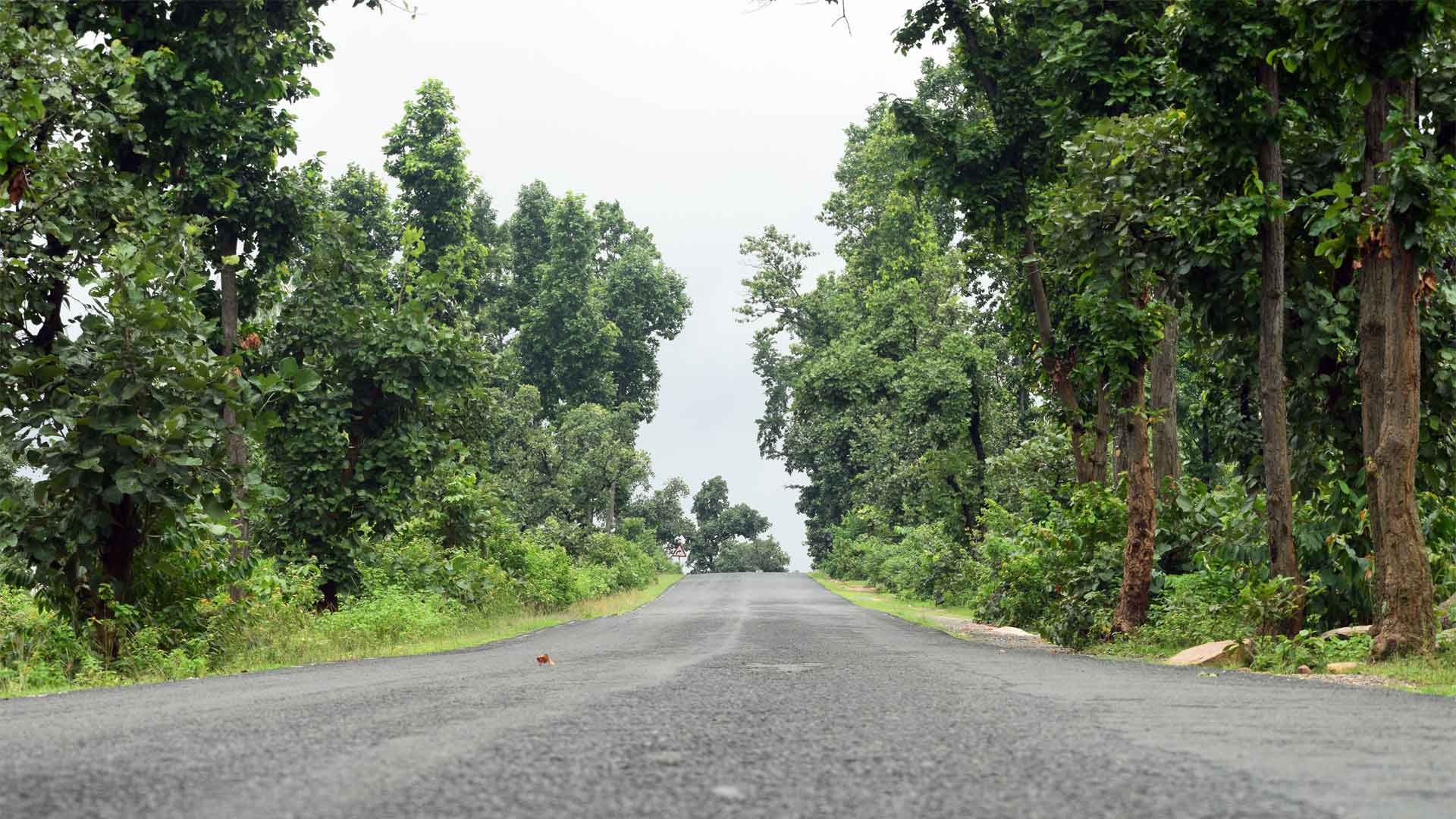Road to Ajodhya Hill